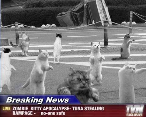 S3 E13 – You Are A Cat in the Zombie Apocalypse